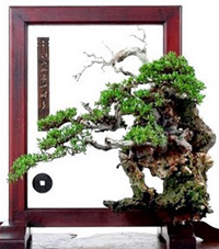 chinese bonsai1 Chinese Art Of Bonsai   Penjing