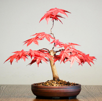 bonsai fertilizing How To Fertilize Bonsai Tree