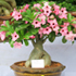 desert rose bonsai 70x70 Bonsai Tree Catalog
