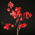 flowering quince bonsai 70x701 Bonsai Tree Catalog