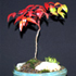 heavenly bamboo bonsai 70x70 Bonsai Tree Catalog