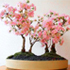 japanese cherry bonsai 70x70 Bonsai Tree Catalog