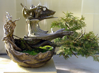 eastern white cedar bonsai5 Eastern White Cedar Bonsai Tree