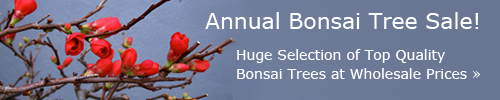 bonsai banner1 How To Grow and Care For Bonsai Tree