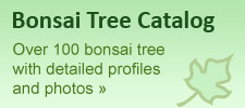 bonsai banner1a How To Grow and Care For Bonsai Tree