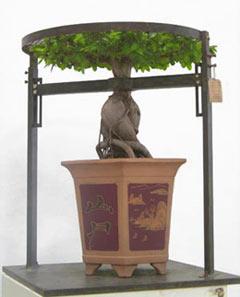 Chinese Bonsai Tree