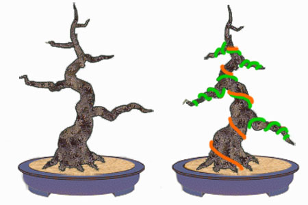 How To Wire Bonsai Tree The Right Way Chinese Bonsai Garden